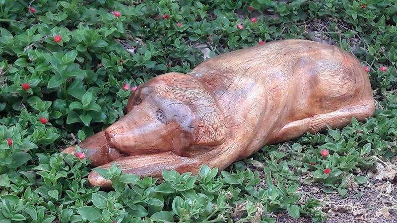 הכלבה של ראובן, ככל הניראה עץ פיקוס